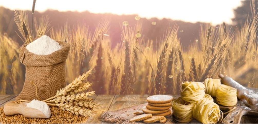 Yerli tohum için seferberlik başlatıldı!